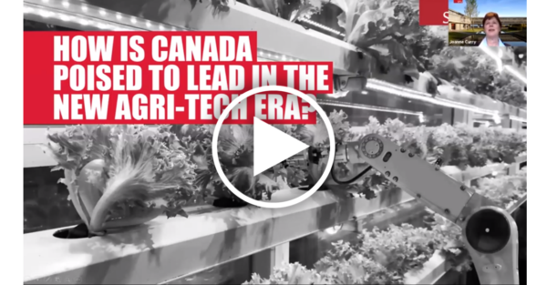 A photo of hydroponically grown lettuce with the text: How is Canada posted to lead in the new agri-tech area?